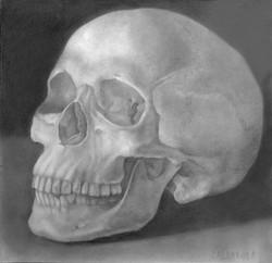 Human Skull Specimen Study