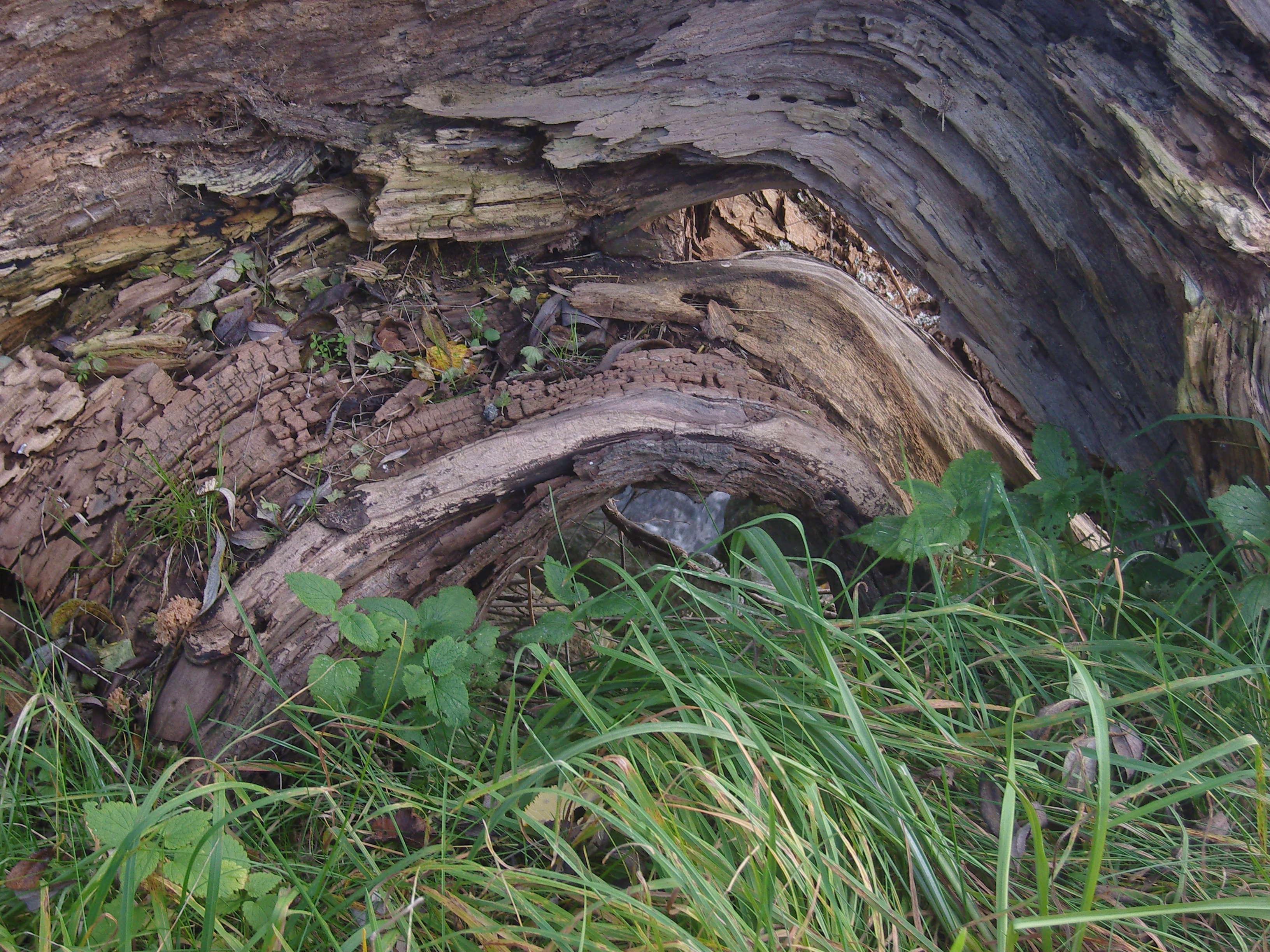 altes Holz