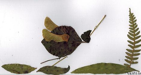Blätterbild 3 (3).jpeg