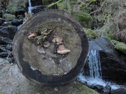 Baumpilz Wasserfall