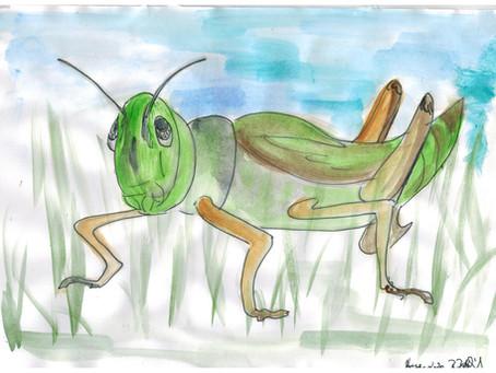 Wo sind sie geblieben....? Es gibt so wenige Insekten...