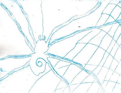 Spinne_