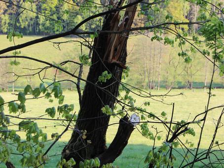 Natur- und Erzgebirgsliebhaber Doktor Wald (H)Erzgebirge- der etwas ganz andere Naturgang