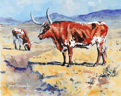 """Longhorns in the Big Pasture"""