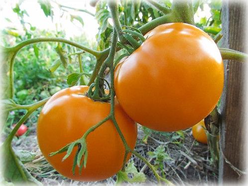 Оранжевый юбилей