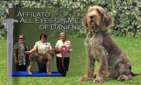 Affilato All Eyes on Me of Danien