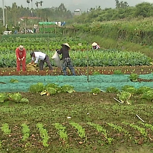 farm-3.jpg.png