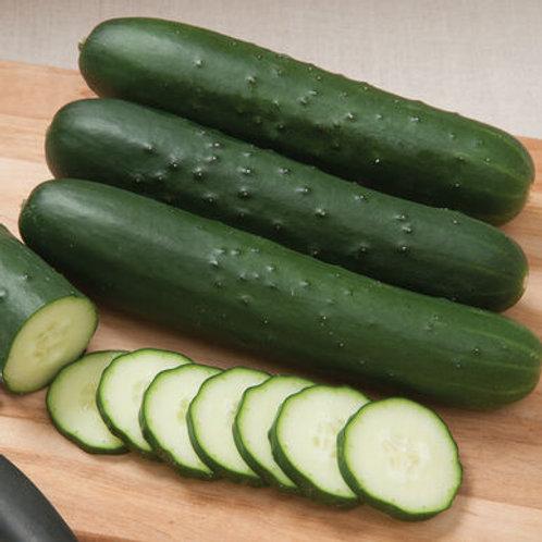 Slicer Cucumber - each