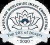 2020-Badge-Top-20-Percent.png