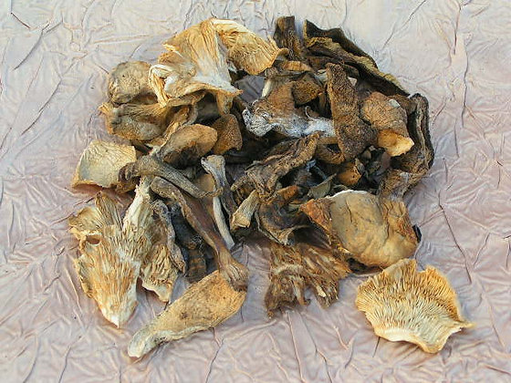 Dried Mixed Forest Mushrooms