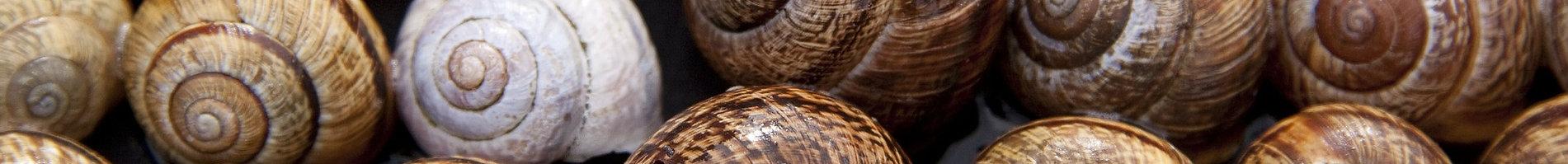 snail-shells-65358_1920.jpg