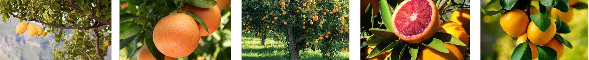 Ravifruit4.jpg