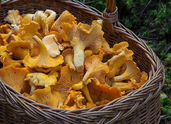 Frozen Chanterelles Whole - 1Kg