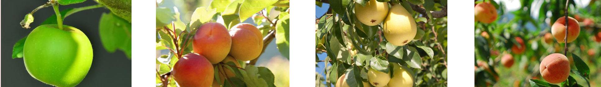 Ravifruit3.jpg