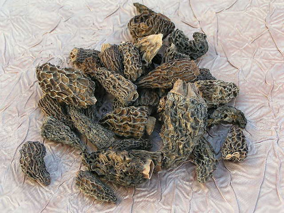 Dried Morels 1st Choice