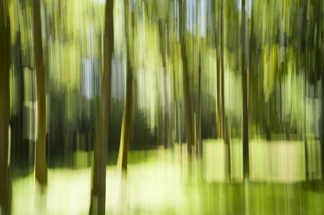 © Guillaume Chaplot - Dans la forêt