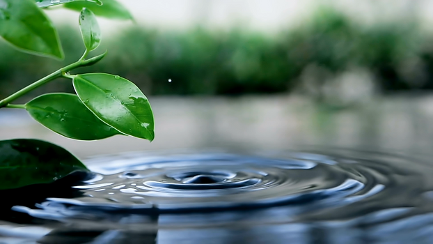 fresh leaf with water dropping_2.png