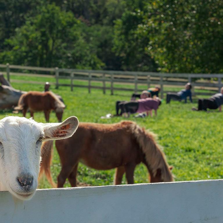 Mini Horse & Goat Yoga