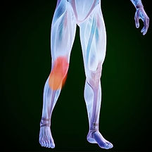 visual representation of our body highlighting knee