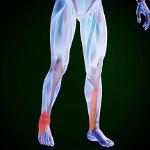 visual representation of our body highlighting knee and ankle