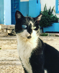one eyed cat, Taghazout Morocco