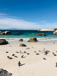 Capetown penguins
