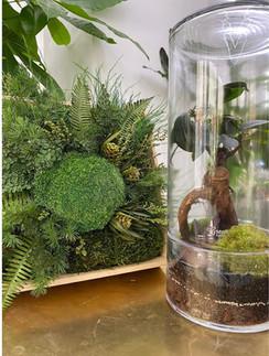 cadeau cadre vegetal rouen et pari