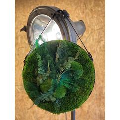 végétaux stabilisé rouen et paris