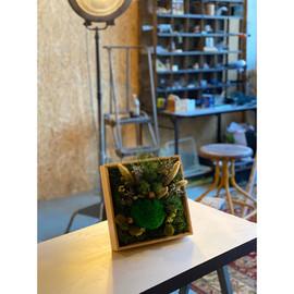 cadre végétaux rouen et paris