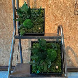 cadeau naturel cadre végétal rouen et paris