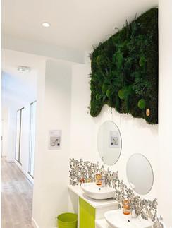 mur végétal, tableau végétal rouen et paris