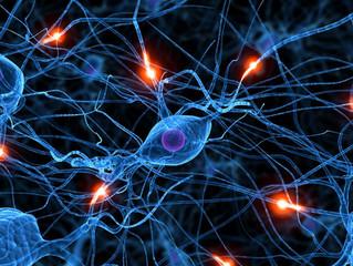 Связь между полушариями мозга является ключевым фактором в развитии языковых навыков.