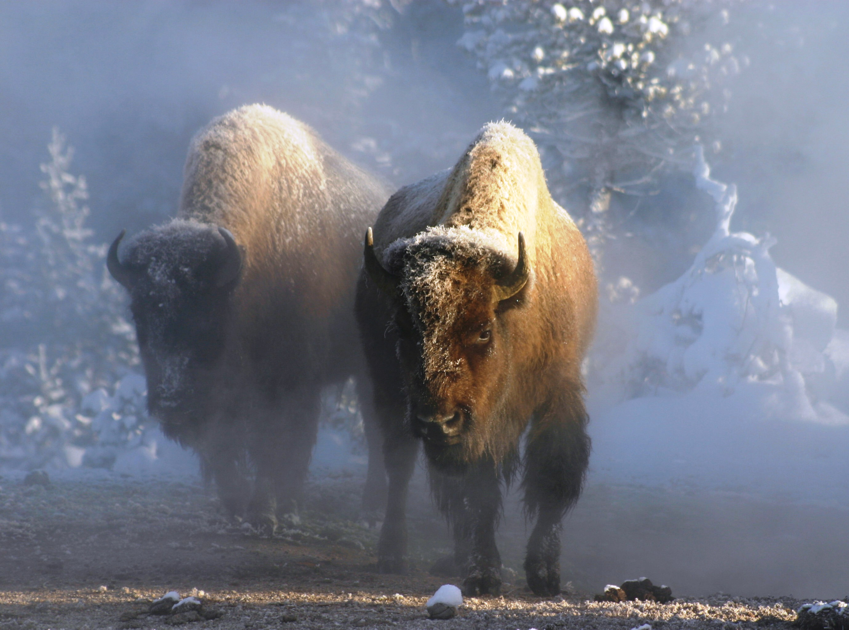 Yellowstone©Ben_Forbes_(2)