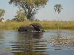 Pride of Africa boat safaris