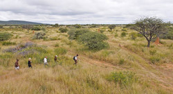 Walking in the Reserve