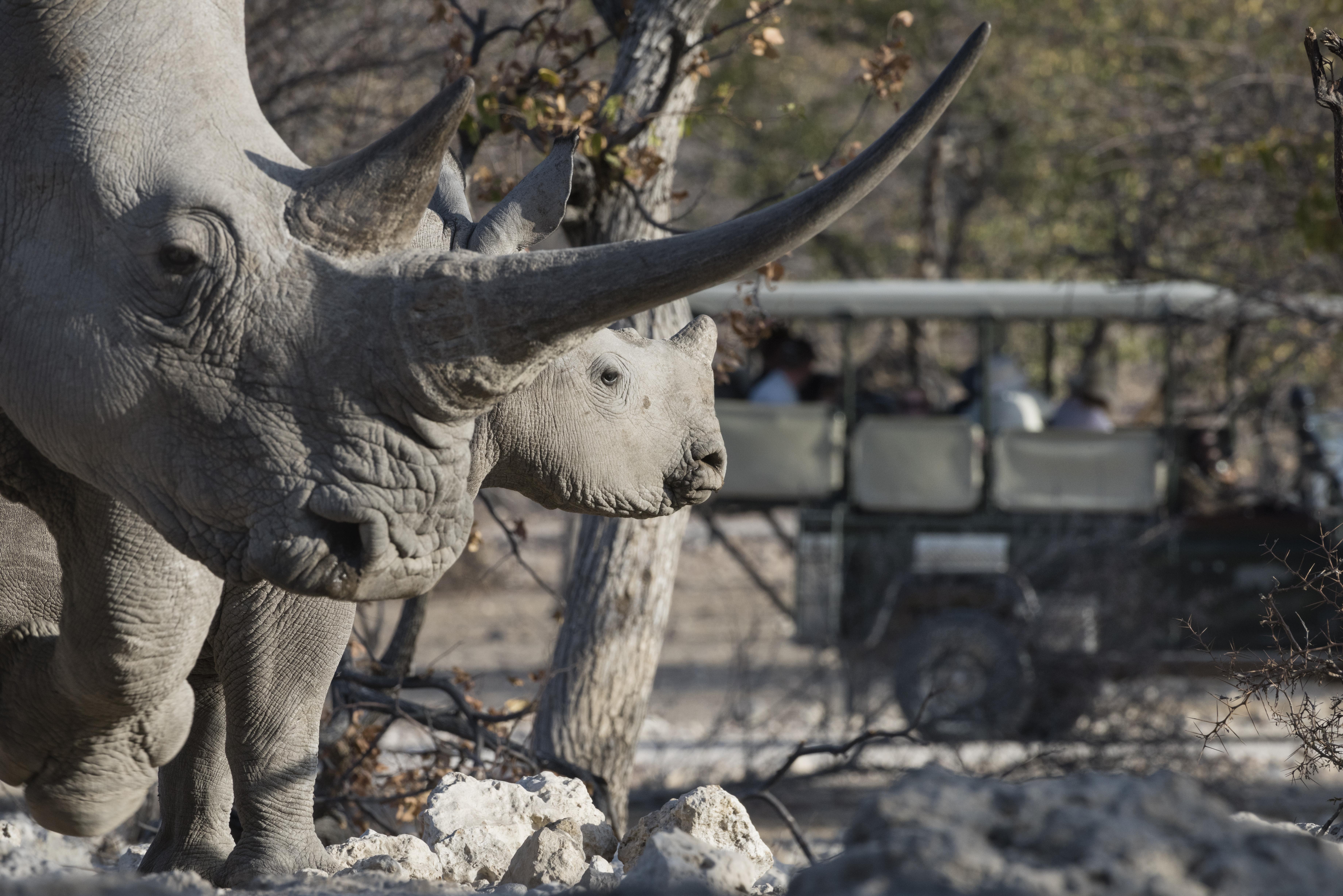 Rhino in the Reserve