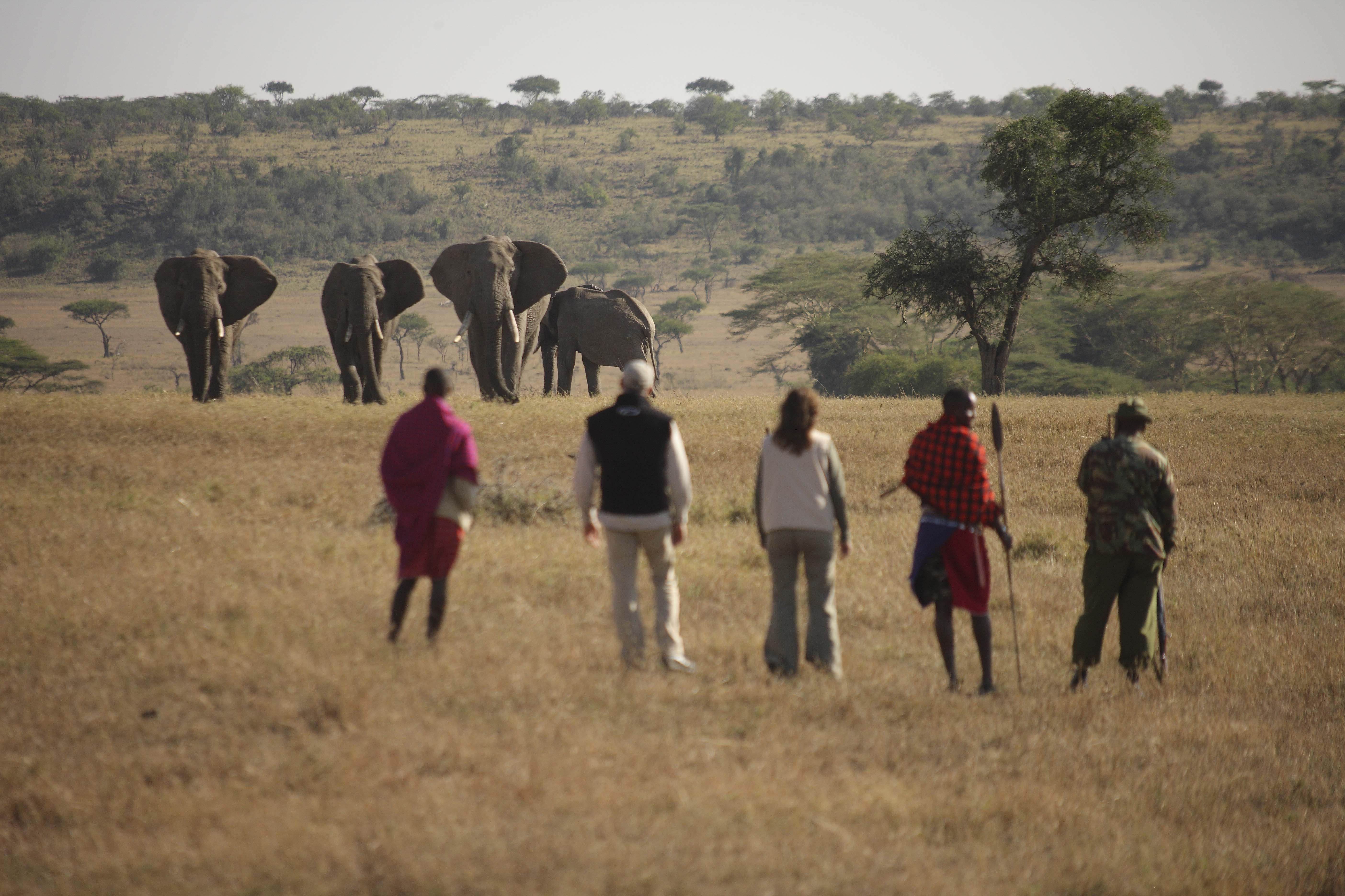 Naboisho elephant walk