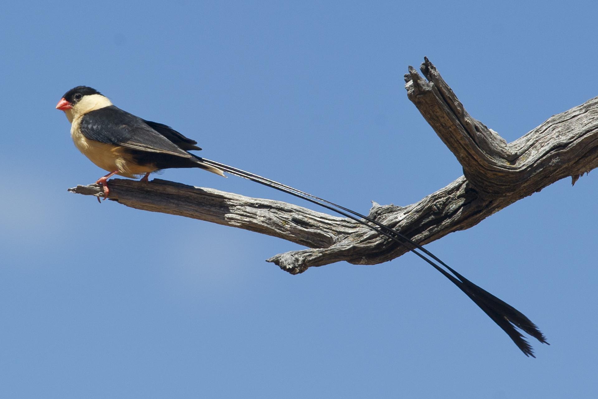 Birding at Okonjima