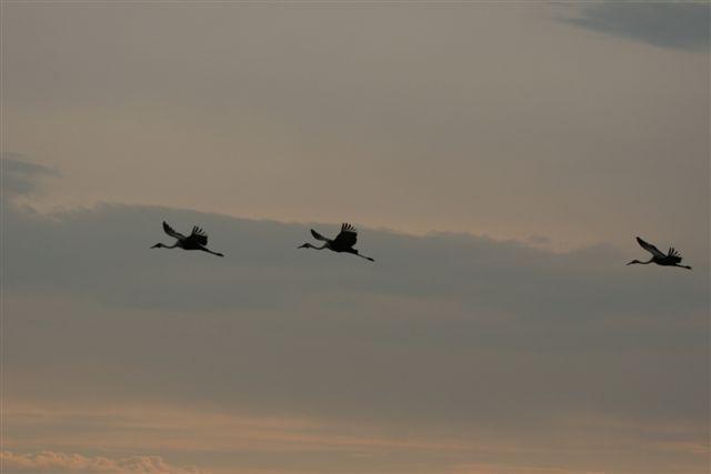 Okavango birding