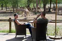 Game viewing from camp