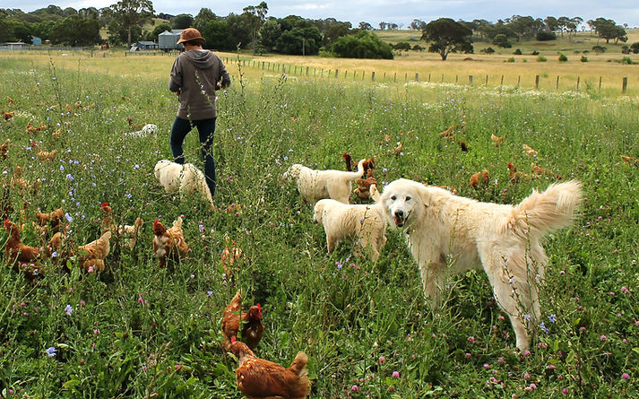 Fiona-with-hens-and-dogs-in-a-thriving-p