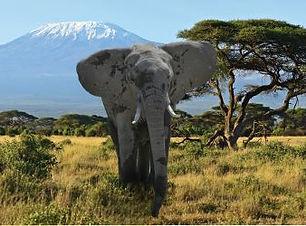 shadow of kilimanjaro.JPG
