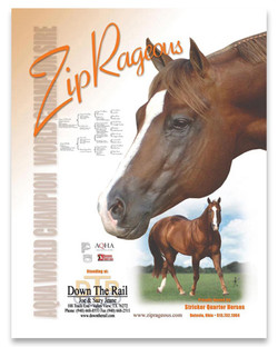 Equine Chronicle