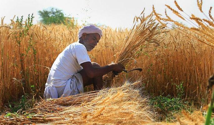 wheat-rep-pti-1558002359.jpg