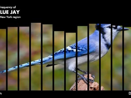Data visualization of bird data