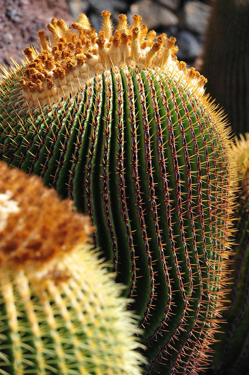 Hinter Hintergrund Kaktus 1.JPG