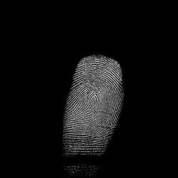 Forensic Investigation Finger Print