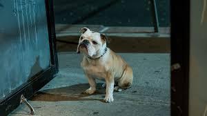 主人公の愛犬マーヴィン