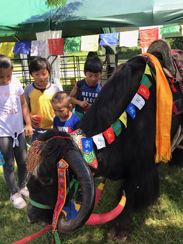 Jericho the Guinness World Record holder for Longest Horns on a Yak visiting with children before his presentation in the ceremonial tent.