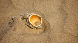 Kokosnuss im Strandsand